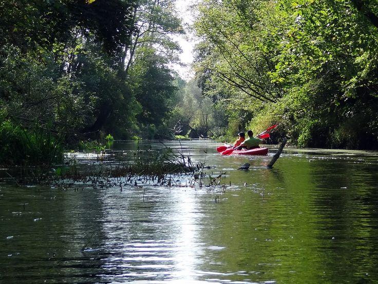 Spływ kajakowy rzeką Wkrą przez rezerwat Dziektarzewo.