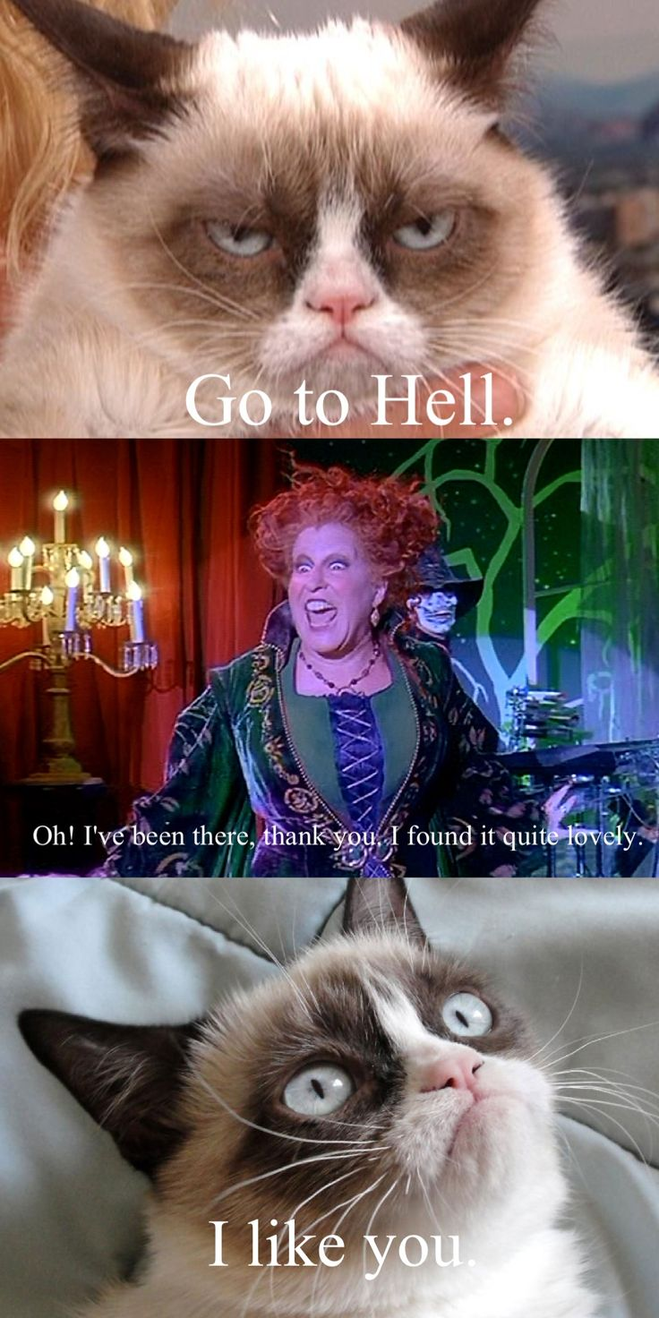 Hocus pocus. Winifred.  #GrumpyCat #Tard #TarderSauce #meme #LOL #humor #grumpy #cat #funny  #quote #quotes #smile  #meow #kittens #frown #GC