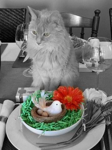 colour splash   Color Splash   My Favorite Photo Editing Apps   Pinterest