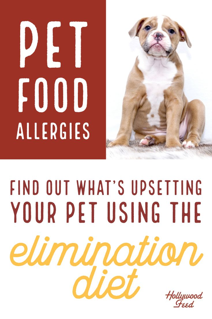 What Are Food Allergies And How Do I Stop Them Pet Allergies