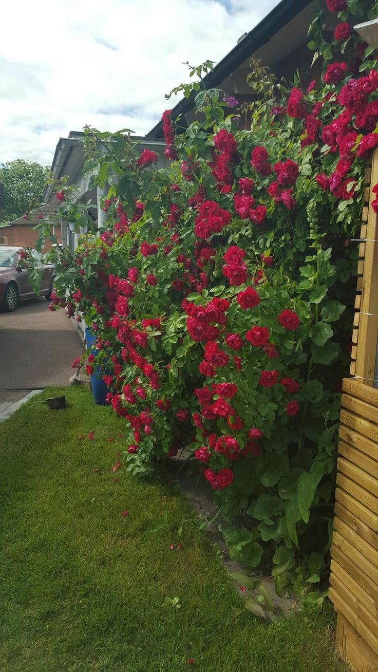 my corner of the world: Rose's