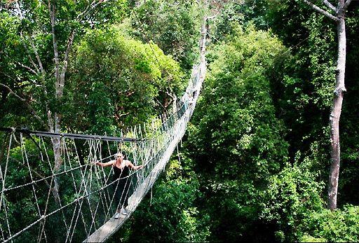 Malaysia Taman Negara