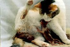 Cat birth – when to wait and when to worry | International Cat Care