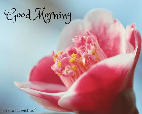 beautiful good morning wishes flowers best hd images