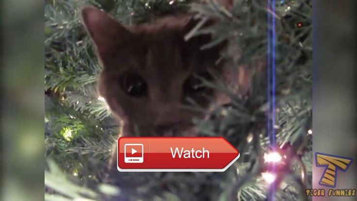 😸 Wow Top funny cat videos 😼 Funny Cats Kucing Lucu 😽 on Pet Lovers 😻