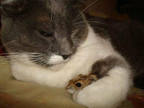 Beneficios del Gato como Mascota - TvAgro por Juan Gonzalo Angel