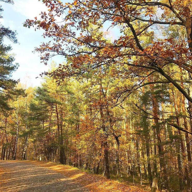 Kampinos National Park. . #familywalk #walkwithkids #homeschooling #homeschoolingmom #homepreschool #autumn #familytrip #kampinos #kampinoskiparknarodowy #kampinosnationalpark #way #road #forest #autumnforest #simplelife #theartofsimple #slowlife #slowliving #relax #recharge #forestbathing #colorfulleaves #colorfulforest #explore #perfectday #perfect #day #landscapephotography #neverstopexploring #getoutside