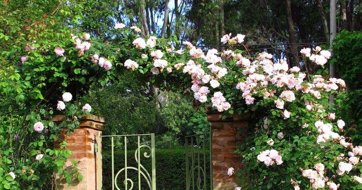 Después de unos años volví a las rosas trepadoras, finalmente encontré una buena excusa con este portoncito de entrada que pedía a gritos...