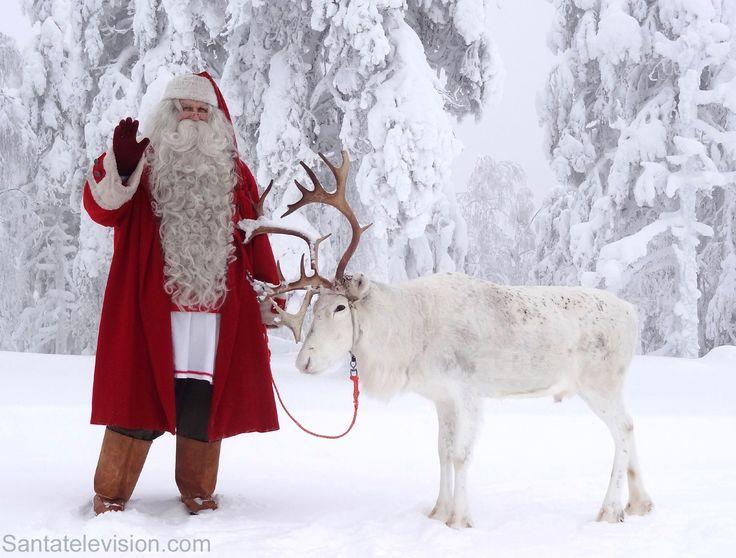 Le Père Noël et un de ses rennes dans la forêt en Laponie en Finlande