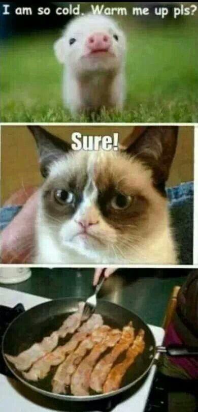 Grumpy cat likes bacon!!!
