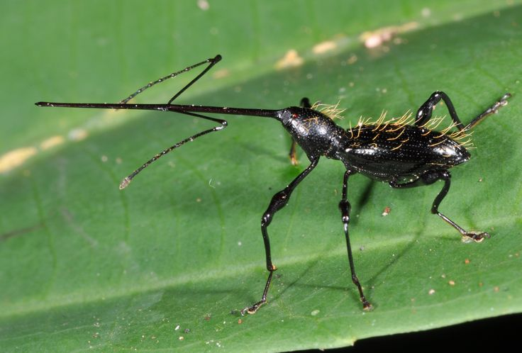 Hidden Unseen: The Most Unbeweevable Weevils