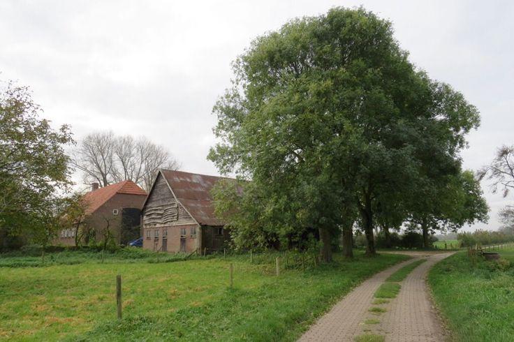 2014-10-26 Oude boerderij op terp in het dijklandschap nabij Cortenoever