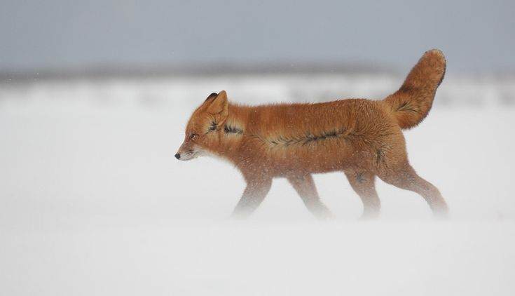 Look at these cute foxes saying a hearty goodbye to winter
