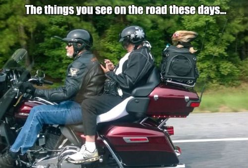 http://bikeglam.com/the-16-funny-motorcycle-quotes-of-all-time/