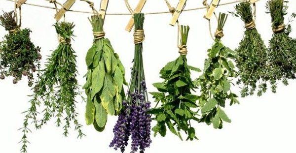 Πλήρης κατάλογος βοτάνων και οι θεραπείες τους – μάθε τις ασθένειες που θεραπεύει κάθε βότανο