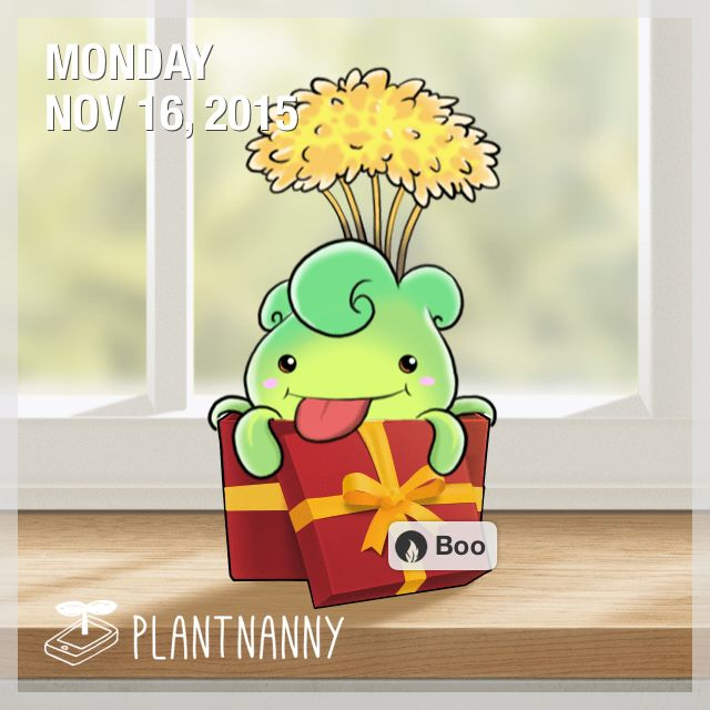 Say hello to my plant! It has absorbed 12,000 ml of water. Get yourself a plant at http://fourdesire.com/outer_link?url=http://itunes.apple.com/app/id590216134&l=en_ID&m=564913AF