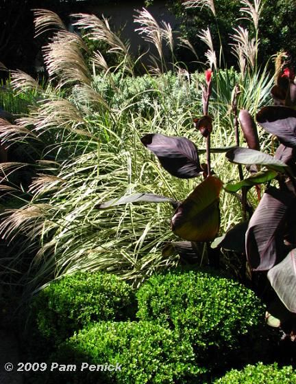 Ornamental grasses yorkshire : Best images about garden grasses on gravel