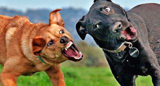 """""""O Grito do Bicho"""": Briga de cachorro: é fácil separar?"""