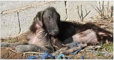 Shadow was a stray dog living alone on the streets in the outskirts of Athens, Greece. She slept on a pile of trash, and ate rotting corps...