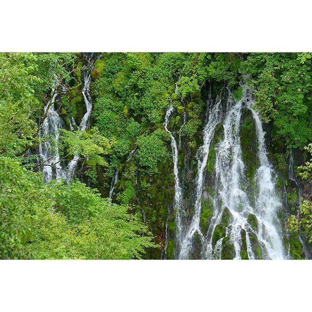 【sugiyama.koichi】さんのInstagramをピンしています。 《#トレッキング #森林 #五色ヶ原 #乗鞍山麓 #入山規制 #貴重な自然 #高山 #フィトンチッド #岩からしみ出る豊富な水量の滝  #trekking #nature #forest #falls #goshikigahara #takayama #norikura #gifu  #japan》