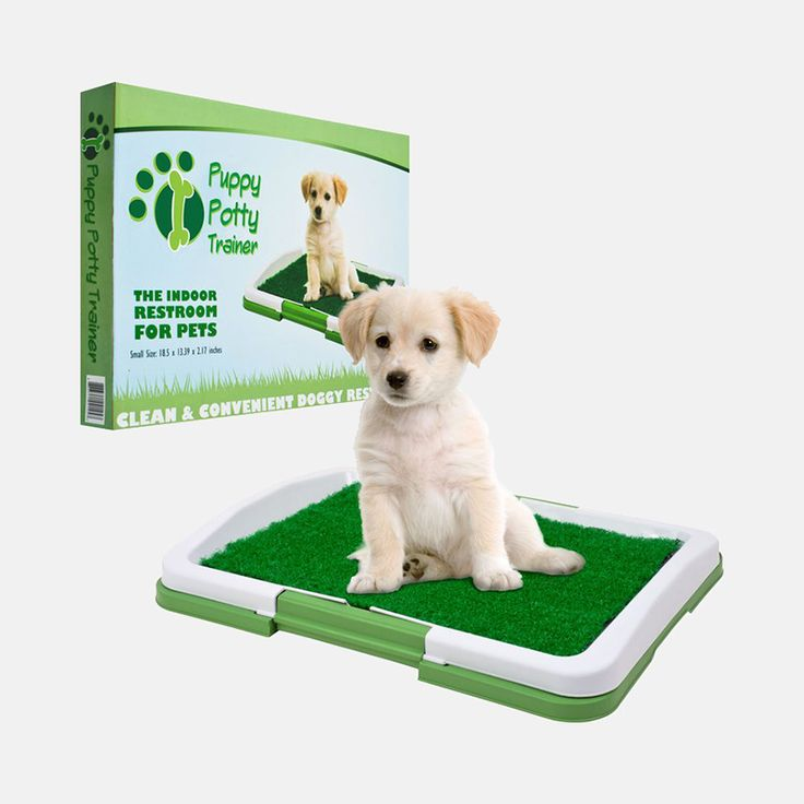 25 best ideas about potty trainer on potty toilets how to potty and