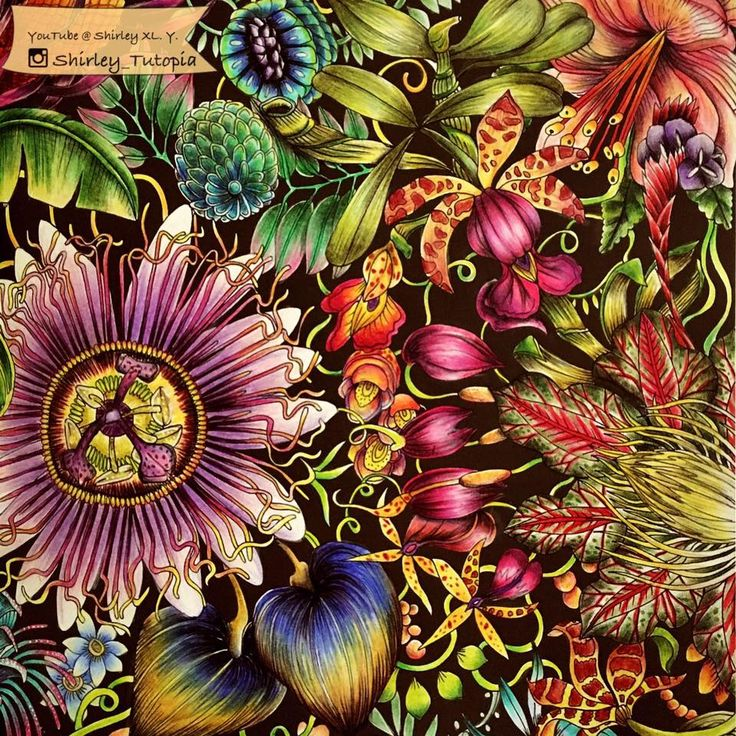 Colored By Shirley Tutopia Fruit FlowersAdult ColoringColoring Books PrismacolorRainforestsOrchidsJohanna