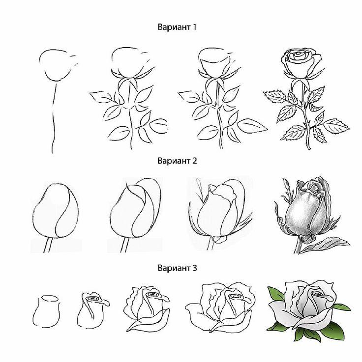 Веселый, роза рисунок карандашом поэтапно для начинающих
