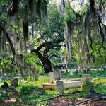 Southern Living's Southern Gothic Lit List. Picture: Deep respect for remembering the dead, and love that spanish moss on the trees!!