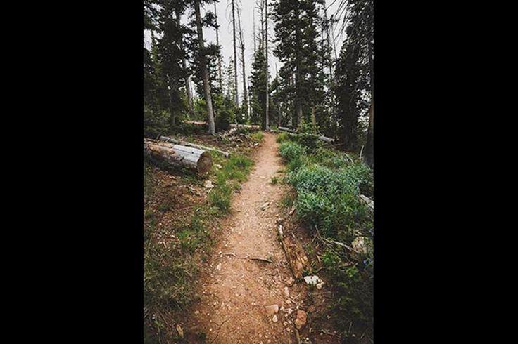Hikes Near Cedar City - Dixie National Forest Trails | Visit Utah