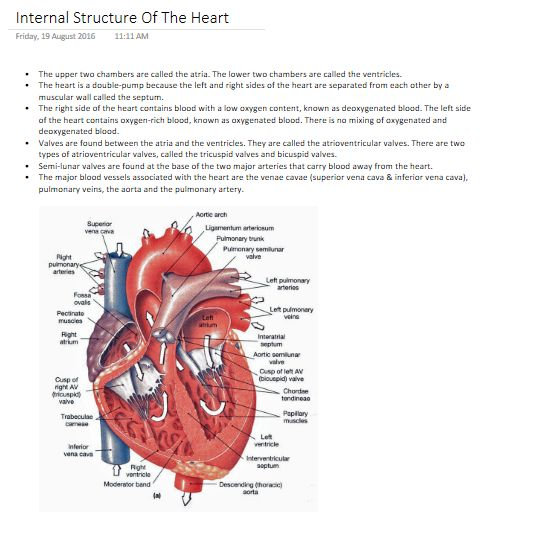 Best 25+ Structure of the heart ideas on Pinterest | Heart human ...