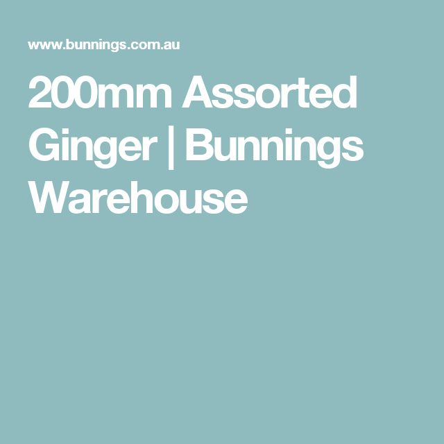 200mm Assorted Ginger | Bunnings Warehouse