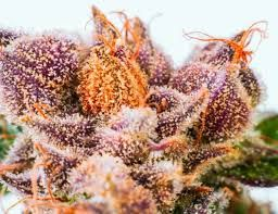 Buy Marijuana Online | Buy Weed Online | THC and CBD Oil For Sale. Buy Marijuana Online, Buy Medical Marijuana Online, Buy   Weed Online, Buy Cannabis Oil Online, Cannabis Oil for Cancer, THC, CBD Oil, hash,wax,shatter for sale,medical marijuana, cannabis,weed ,oil,THC,CBD,Concentrate.contact infor@ Goto....https://www.jointcannabisdispensary.com  Text or call +1(408)909-1859