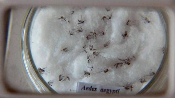 Porto Rico confirma primeiro caso de Zika vírus | EP Human