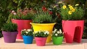 Gardening: spring colour