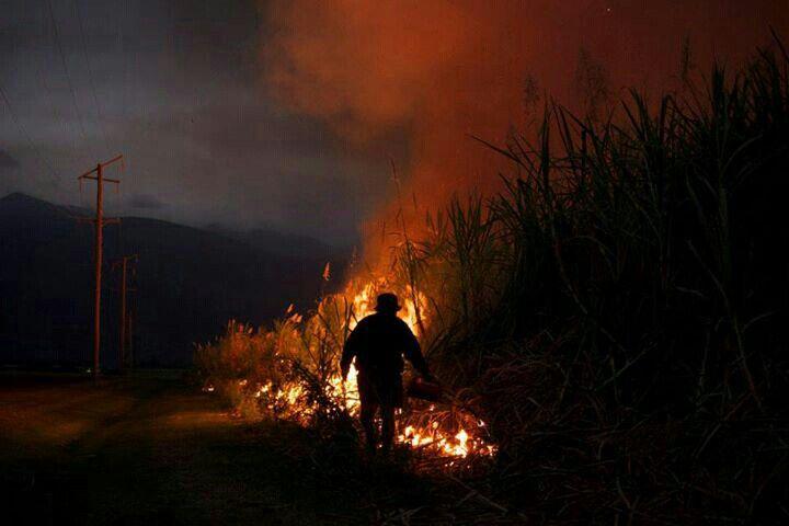 Cane fire; Giru (Burdekin) North Queensland, Australia