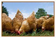 Demesne Farm Bunkhouse  Campsite Demesne Farm Bellingham Northumberland NE48 2BS Tel: (01434) 220258 Mobile: (07967) 396345 Email: stay@demesnefarmcampsite.co.uk