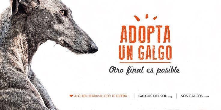 """Necesitamos ayuda para colocar este cartel en #Murcia, con él queremos promover la #adopción junto a @Tina Doshi Doshi Solera.  Imprimirlo y ponerlo son 264€ y 120€ mensuales mantenerlo expuesto. Necesitamos vuestras aportaciones, lo podéis hacer a través de este número de cuenta 2100 0148 53 02 00582650 o Paypal sosgalgos@sosgalgos.com No olvidéis indicar en el concepto del ingreso """"Cartel Galgos del Sol - SOS Galgos"""". Muchas gracias. """