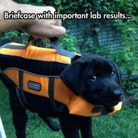Important lab results