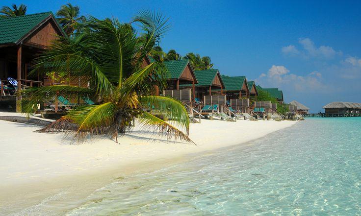 #Maldives . Considérée comme l'une des plus grandes îles de l'atoll de Malé, l'île de Meeru fait 1,2 km de long pour 600m de large. Végétation verdoyante, sable blanc et fin, hibiscus et plantes tropicales jonchent cette somptueuse île. Une destination de rêve à découvrir sans plus attendre pour tous les vacanciers amoureux de la nature. http://vp.etr.im/XY
