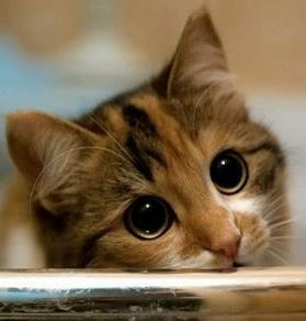 A cat. Indeed.Kitty Cat, Real Life, Cat Eye, Sweets, Adorable Cat, Kittens, Big Eye, Boots, Animal