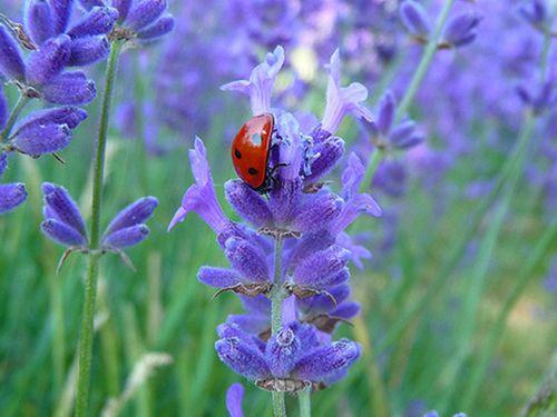 As melhores flores perenes para o seu jardim | O Meu Jardim