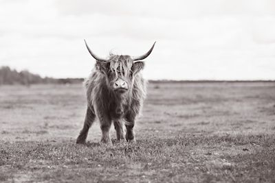 Hanna Ågren - Hello. A black and white photo of a cow on a field.