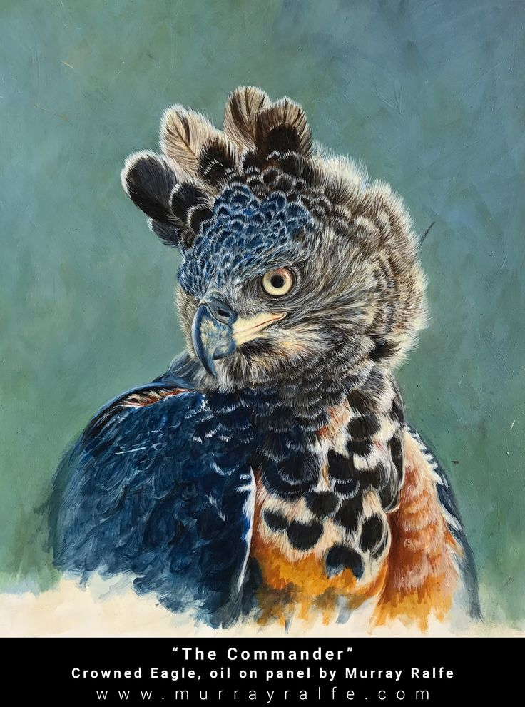 """Title: """"The Commander"""" Size: 360 x 450 mm  14' x 17,7' Medium: Oil on Gesso coated Panel Depiction: Crowned Eagle Artist: Murray Ralfe"""