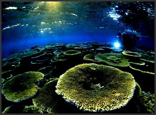 barrera de coral club cientifico bezmiliana - Buscar con Google