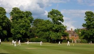 Cricket at Teddies
