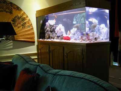 aquarium stand plans | 150 Gallon Marine Fish Tank