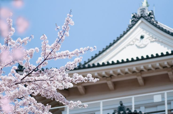 You can enjoy sakura, a crab buffet and strawberry picking all in one day!