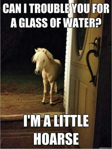 :): Animals, Horses, Hoarse, Funny Stuff, Humor, Funnies, Things