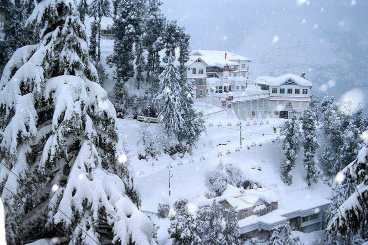 Wrapped in Snow flakes Dalhousie,India.