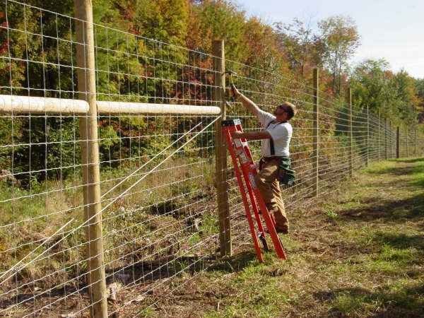 Top 25 ideas about deer fence on pinterest fence garden for Fishing line deer fence
